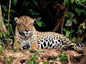 Brazil_Pantanal_Photo_Walking_Tour.jpg