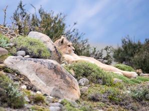 Patagonia_Photo_Walking_Tour.jpg